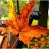 Фолковая осень. Акустический концерт 11-11-12