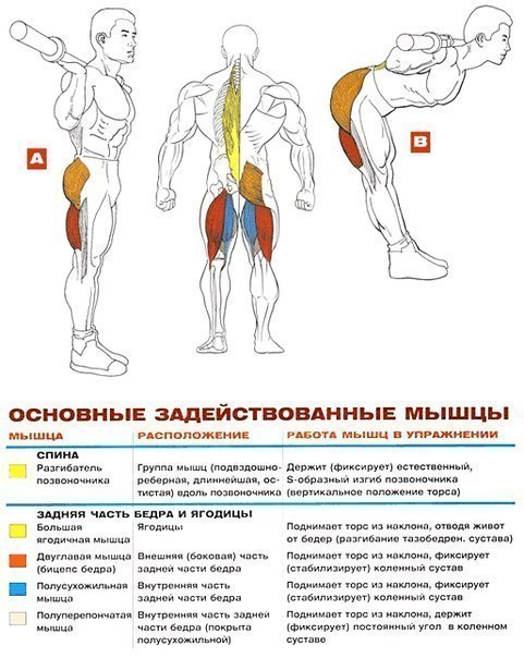 Упражнения спины и бицепса