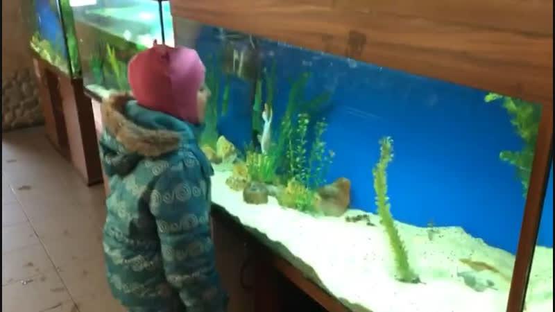 Галька очень понравилась (или очень не понравилась ) рыбке!)