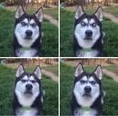 Хозяйка это пса притворилась, будто бросает мячик…