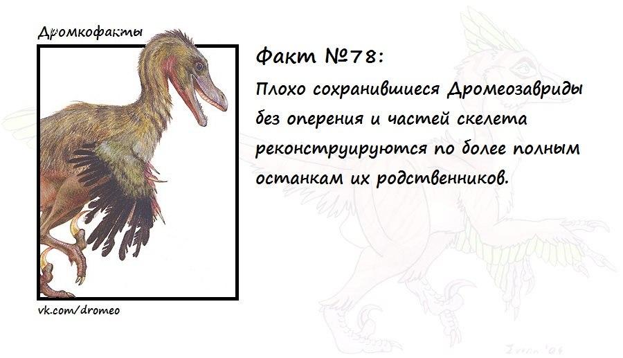 https://pp.vk.me/c621425/v621425874/ee92/66brYvy4nR4.jpg
