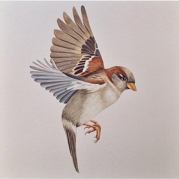 #птицы@tattoobase