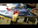 Canine bulldog c-section / caesarean section birth video. English Bulldog