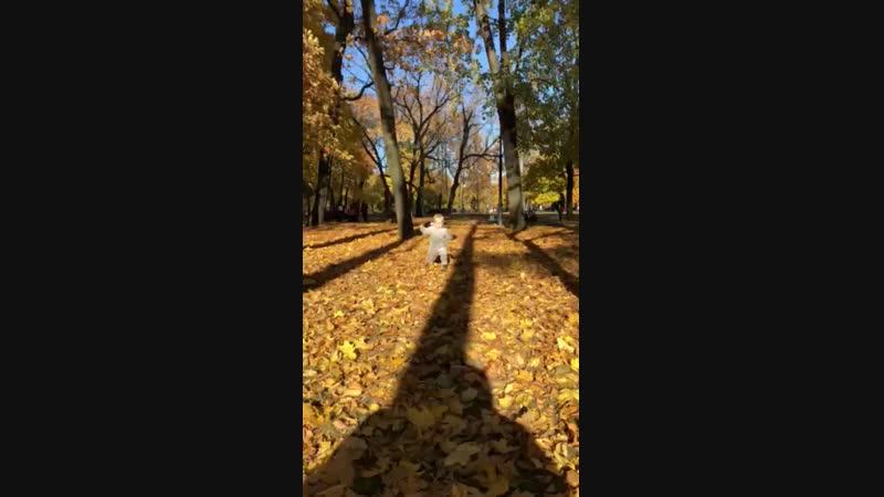 Video-1539601945