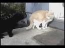 Кот бля у него валына!