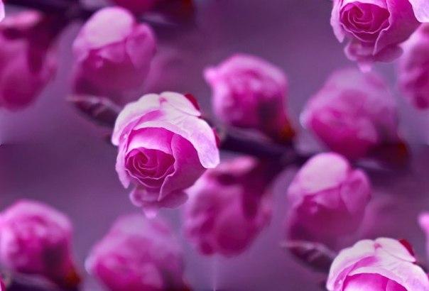 Цветочные и растительные фоны - Страница 2 -M9mcMo2LZE