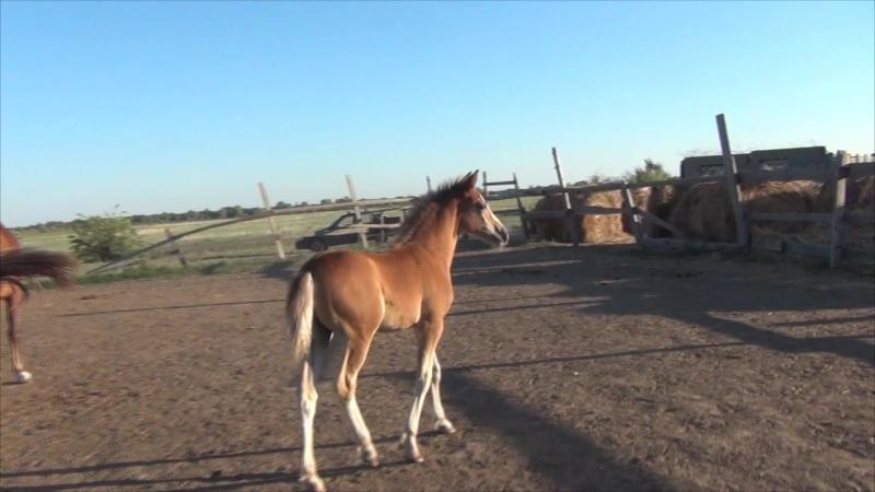 Mustangs notes Душа Прерий Прада
