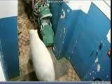 Белый медведь в подъезде дома