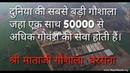 World's Largest Gaushala 50000 Gauvansh, Shri Mataji Gaushala, Barsana