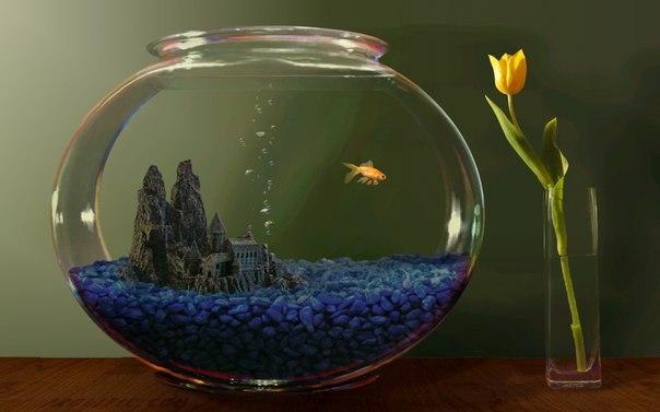 Как сделать в аквариуме красивые пузырьки - Sport holdem