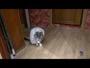3884). 02.12.2018 - Котик Серж уехал домой (видео из дома)