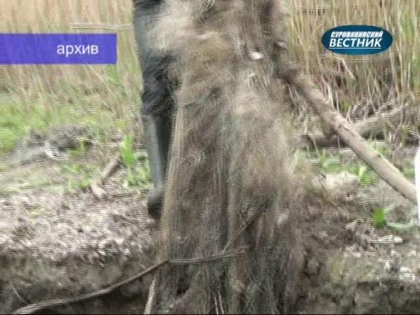 Цимлянский отдел Нижнечирской инспекции рыбоохраны итоги ноября