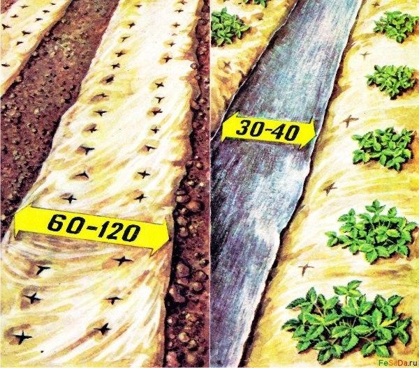 готовимся к новому сезону!полезное о выращивании клубники клубника (садовая земляника) - многолетнее травянистое вечнозелёное растение с регулярным обновлением листьев. наблюдаются две волны