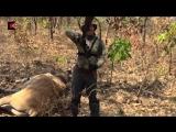 Основной инстинкт - охота в Камеруне - 15 серия