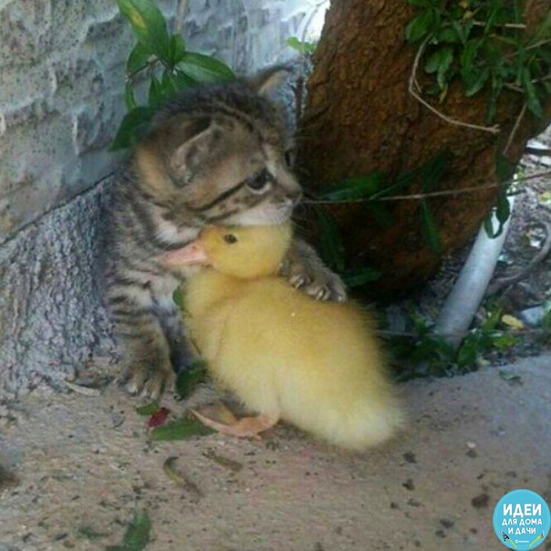 Вот она  настоящая дружба!