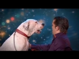 Dog sings Whitney Houston Belgiums Got Talent