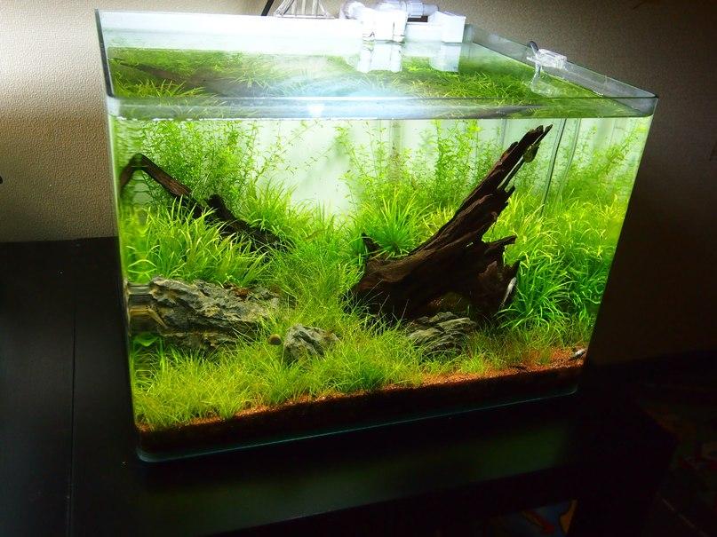 for Aquarium 50l