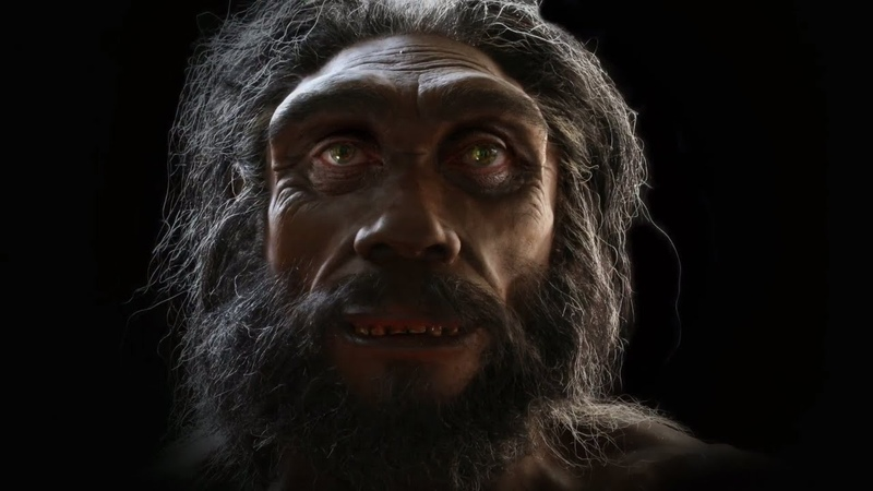 Evolution of Human face in 6 million years in 2 minutes