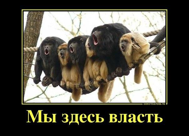 http://cs620823.vk.me/v620823505/18d2/X4z0d4JgDKw.jpg