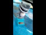 Акула танцы