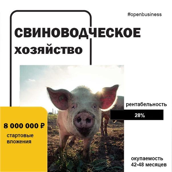 💡 Свой бизнес: фермерское свиноводческое хозяйство 📢Свиньи имеют ряд биологичес...