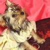 "шьем одежду для собак""Doggy Luxury"""