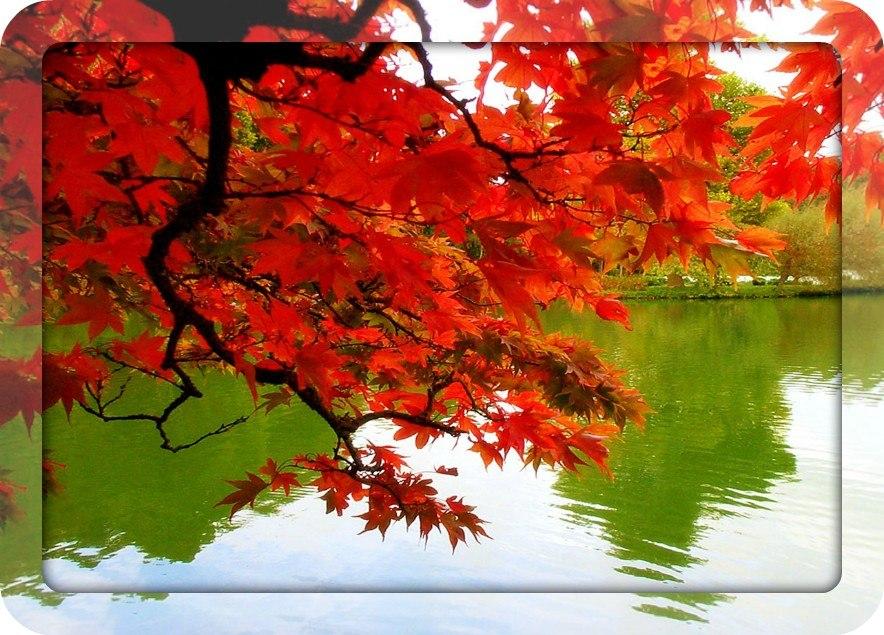 Autumn time ... - Pagina 2 YdBAPaOyHdg