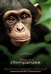 Chimpanzee<br><span class='font12 dBlock'><i>(Chimpanzee)</i></span>