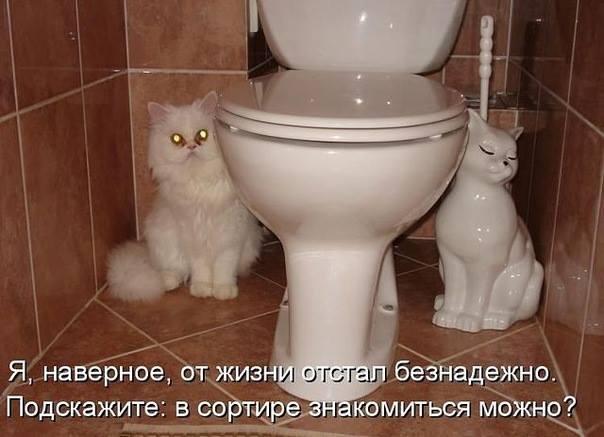 http://cs619120.vk.me/v619120477/3466/aflG8zoMfd0.jpg