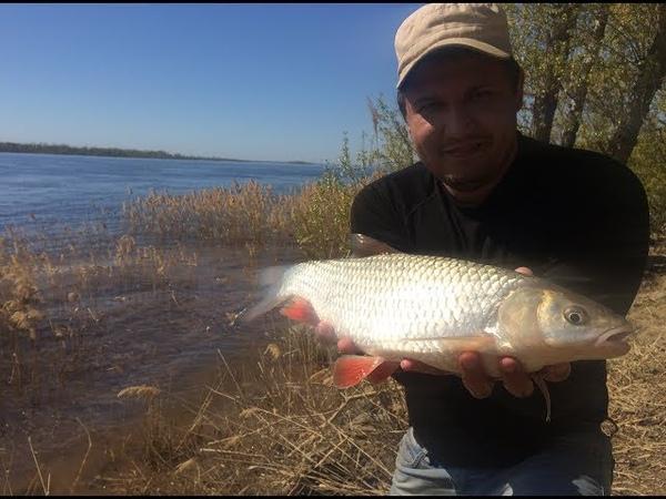 10 Рыбалка с Берега на Реке Волге. Ловля Красноперого Голавля на Донку Фидер