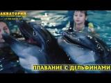 Акватория. Плавание с дельфинами
