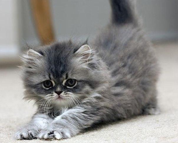 Аниме арт приколы кошки аниме