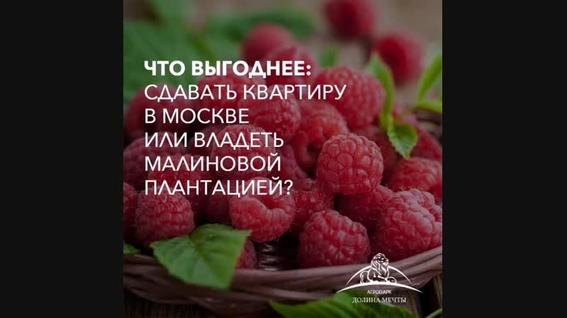 Что выгоднее квартира или малиновая плантация