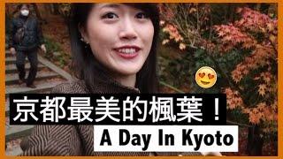 帶你們去看 京都賞楓人氣No.1永観堂!🍁 你同意它是最美的嗎?|MaoMaoTV