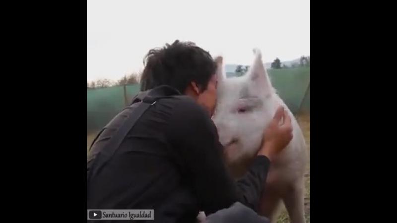 Даже животные знают толк в обнимашках