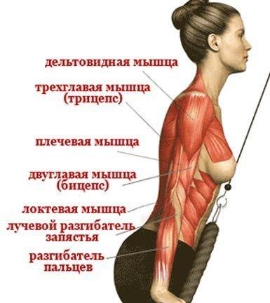 Болит плечо дельты