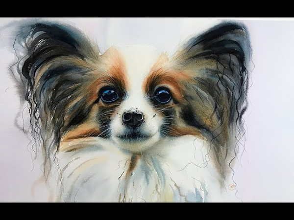 Papillon DOG painting in Watercolor