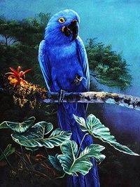 Название Попугаииздательство SamizdatЯзык ИспанскийФормат PDFРазмер 74mbВышивка крестиком-Серия Попугаи-12 картин и...