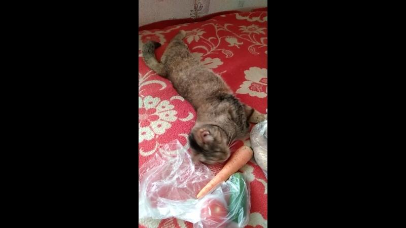 Любовь морковь