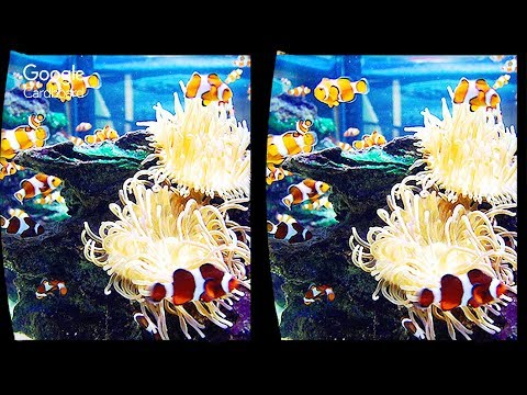 3D Ocean Aquarium VR Videos 3D SBS Google Cardboard VR Virtual Reality VR Box