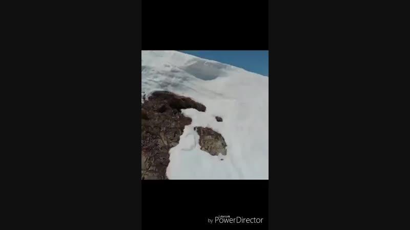 Медвежонки лазиют по снежным горам!