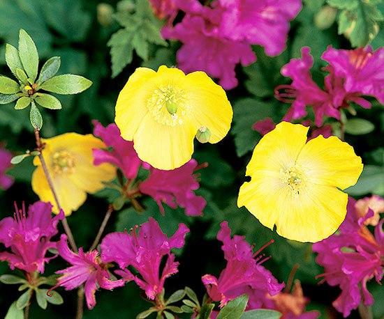 Сад из цветов своими руками