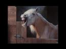 Парковщик, аж лошадям смешно😂