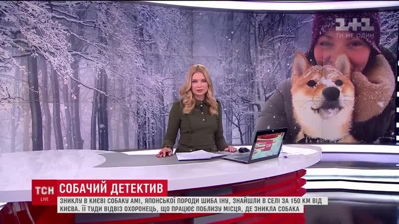 Дівчина знайшла зниклу у столиці собаку Амі у Черкаській області