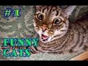 Приколы с котами с озвучкой. Смешная подборка про котов под музыку. Funny cats1