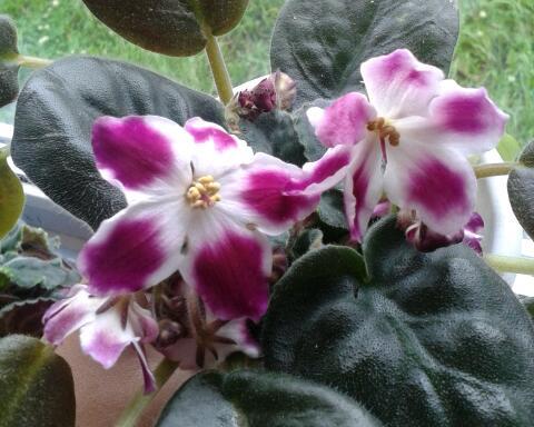 Цветы у Ликки Sek5ROs8nWo