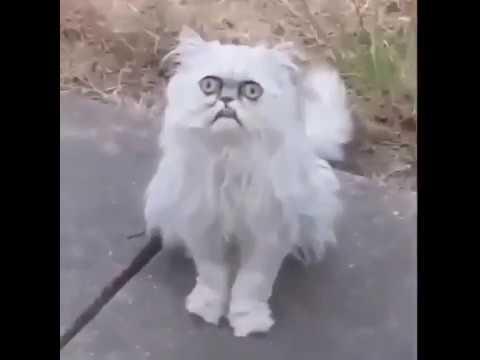 Найден самый страшный кот, взгляд которого вселяет ужас » Freewka.com - Смотреть онлайн в хорощем качестве