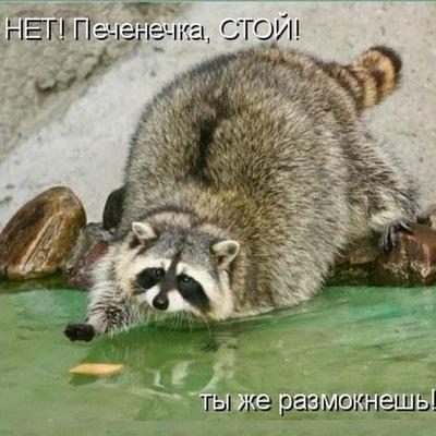 Елена Румянцева, 29 марта , Саранск, id196063869