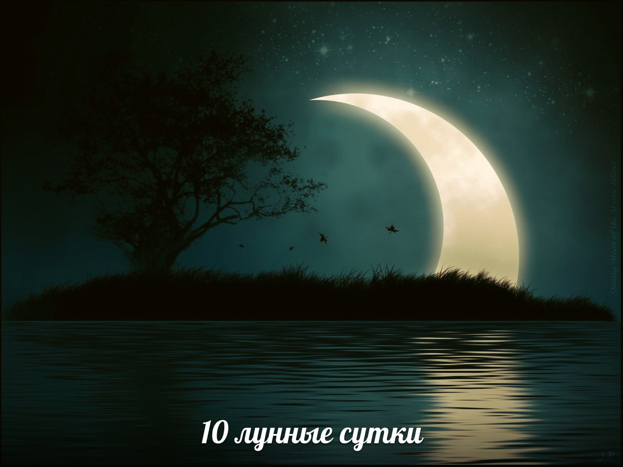 gP_MQFfmkVU.jpg