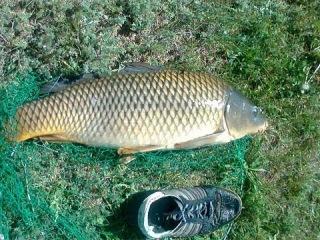 Ловля карпа весной / fishing for carp 2013